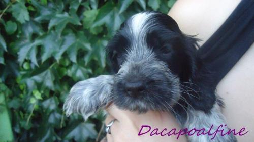 EVERYBODY LOVES ME Dacapoalfine - ''ANDRZEJ''