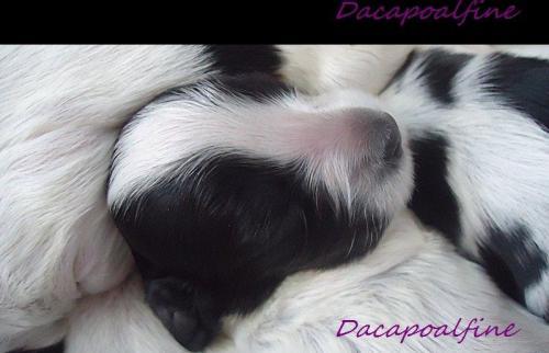koniczynka dacapoalfine