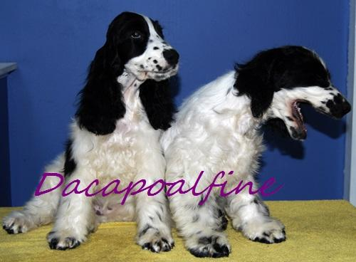 EMERALD Dacapoalfine – KLEMENTYNKAi EAGLET Dacapoalfine – KLEMENS